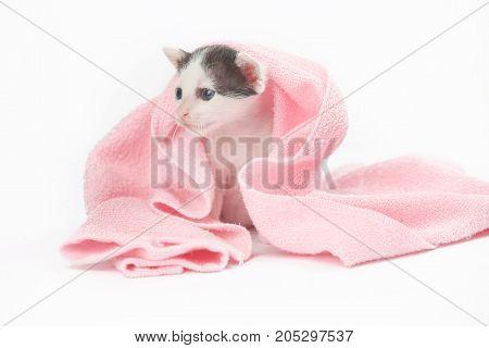 Cute baby kitten wrapped in pink blanket