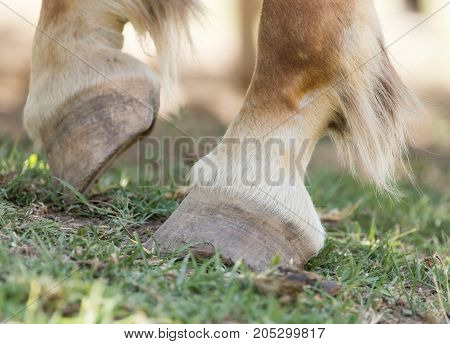 the horse's hooves on the nature . . In a park in the nature