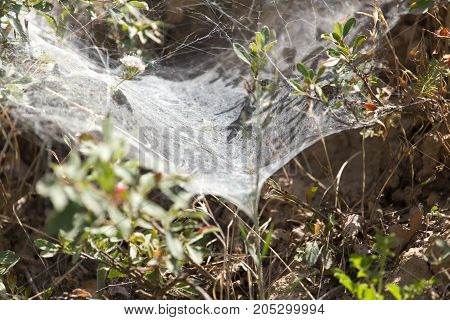Web on the plant in nature . . In a park in the nature