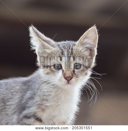 portrait of kitten . In a park in the nature