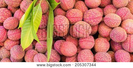 lychee or litchi Litchi chinensis fresh litchi fruits for background