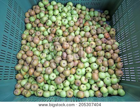 Green Organic Apples In The Box For Sale