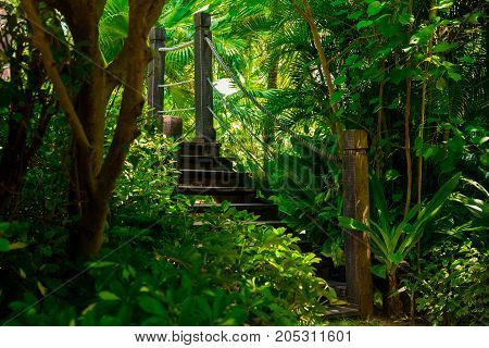 Old wooden bridge in tropical jungle. Crossing in the rainforest, Palm