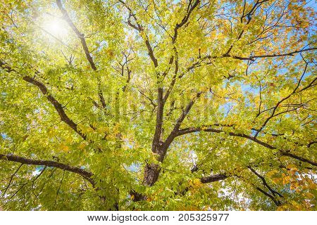Autumn leaves uner tree in autumn for green background