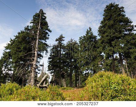 Beautiful trees along the way in Jeseniky mountains, Czech Republic