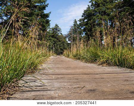 Wooden path in Jeseniky mountains, Czech republic