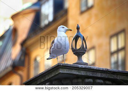 Seagull on top of statue Jarntorgspumpen in Gamla Stan Stockholm Sweden