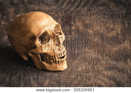 Skull on an old wooden backgroundPhoney human skull on wooden floorHalloween concept