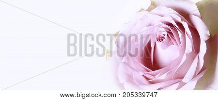 Retro rose shabby chic delicate flower background