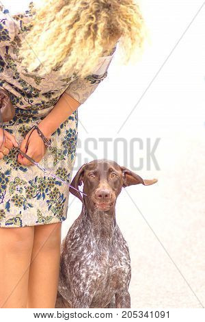 Hunting dog at the exhibition with the owner. Space under the text. 2018 year of the dog in the eastern calendar Concept: friend, protection, loyalty, vigilance, security