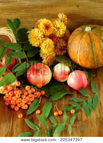 Apples, rowan berries, pumpkin and flowers are lying on a wooden floor. Freshly picked autumn harvest