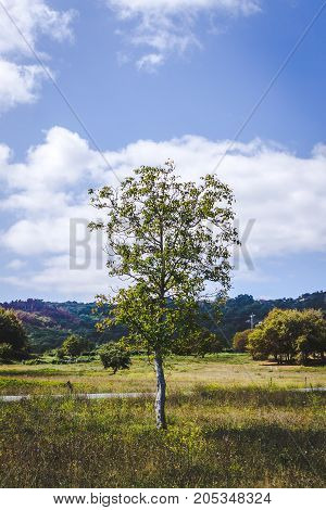 A lonely peach tree in a field. Galicia Northern Spain.