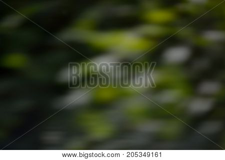 blurred pattern with green spots as a background