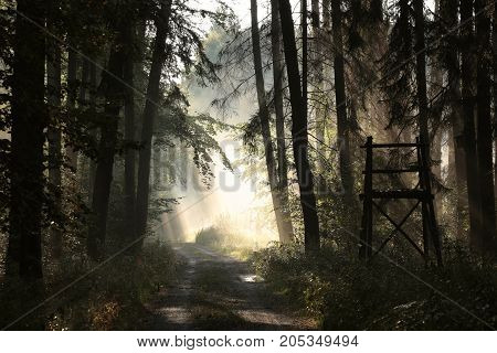 Rural road through the forest on a foggy morning .