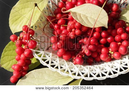 branches with red ripe schisandra and leaves on the plate on the dark background