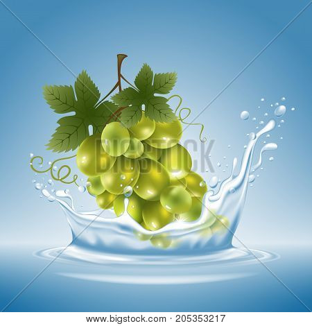 Grape In Water Splash
