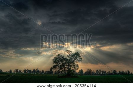 clouds trees outdoors stormy weather natural landscape