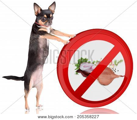 Cute dog chihuahua Push the forbidden onions road sign away