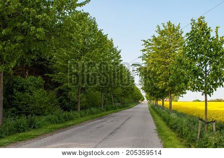 Small Danish Roar With Trees On The Countryside