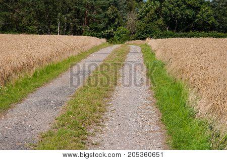 Small Road On Island Of Oroe In Denmark