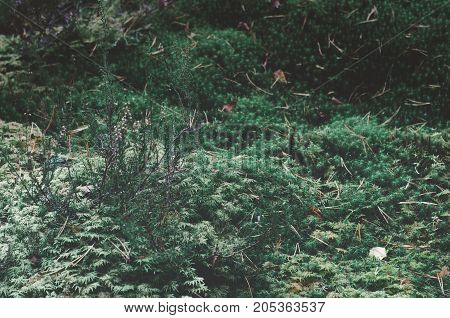 Background of lush green plants on ground and pine needles in air.