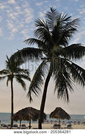 Palm tree on sunny summer Caribbean beach