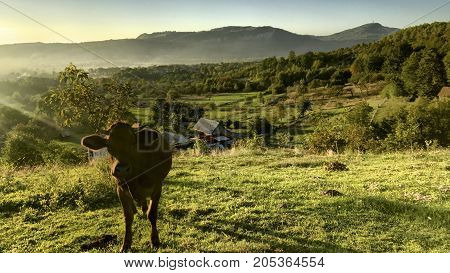 Foothills. A Landscape On Which A Lush Green Grass Grows On The Slope Of The Mountain. Graze The Cow