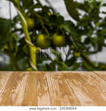 Empty Rustic Wood Table Top On Blurred Green Tomatoes Background In The Garden. Can Montage Or Displ