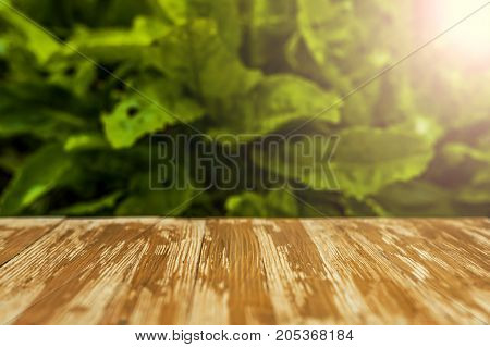 Empty Rustic Wood Table Top On Blurred Sorrel Background In The Garden. Can Montage Or Display Your