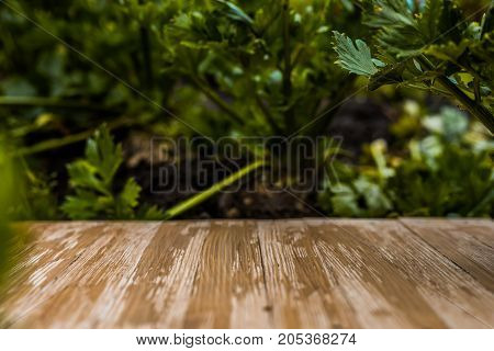 Empty Rustic Wood Table Top On Blurred Celery Background In The Garden. Can Montage Or Display Your