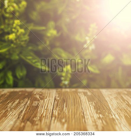 Empty Rustic Wood Table Top On Blurred Basil Background In The Garden. Can Montage Or Display Your P