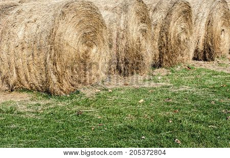 Several large round hay bales drying on green grass.