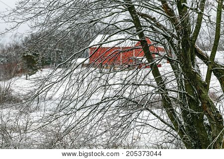snow covered bare branches with a red barn in the background