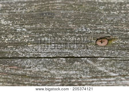 A background worthy image of an old screw embedded in old dry wood.