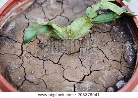 Dry earth in a flowerpot. horizontal day shot