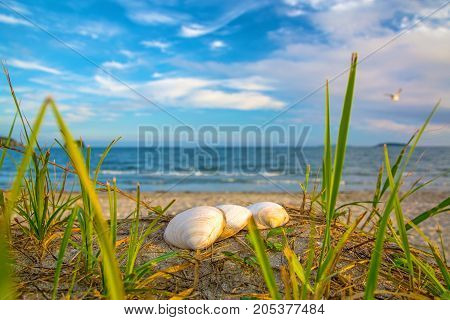 seashells on the beach, lit up by the Sun. Many shells on the white sand. close to the sea and the waves