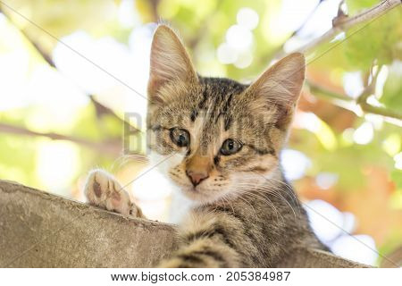 Portrait of a kitten in nature . In the park in nature