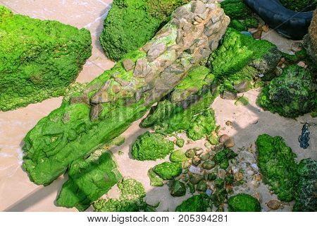 Green moss lichen backgroundStone With Green moss lichen