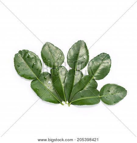 Leaves Of Bergamot Tree Or Kaffir Lime Leaves Isolated On White Background