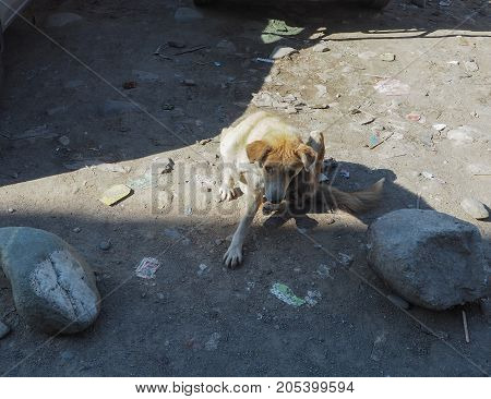 The Weakened stray dog from the shelter. Homeless dogs
