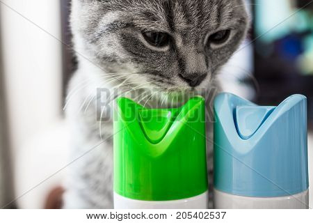 Cat is sniffing cylinder of air freshener. Two cylinders with blue and green caps.
