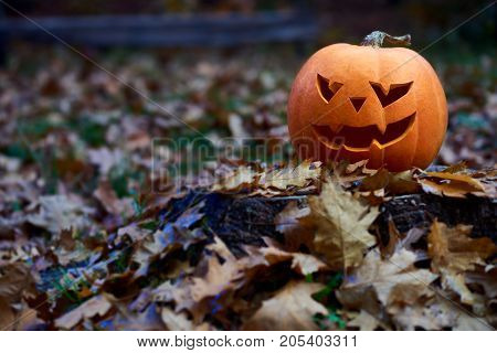 Halloween pumpkin in autumn forest copyspace jack face carved tradition celebration concept.
