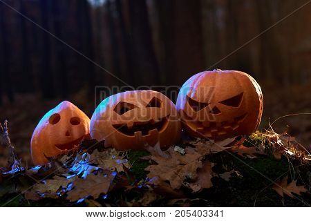 Three Halloween pumpkins in a dark forest celebration tradition scary spooky mysterious concept.