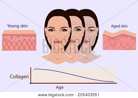 Vector faces and two types of skin - aged and young for medical and cosmetological illustrations isolated, aging process