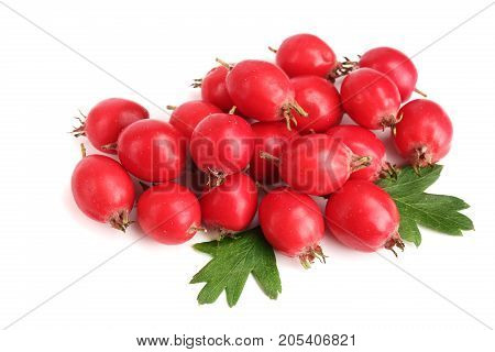 Hawthorn berry with leaf isolated on white background close-up.