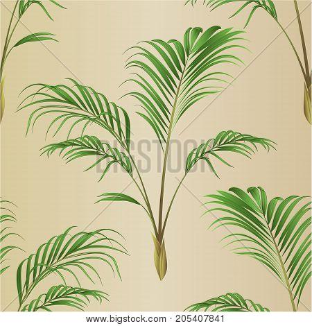 Seamless texture Palm decoration house plant vintage vector illustration editable hand drawn
