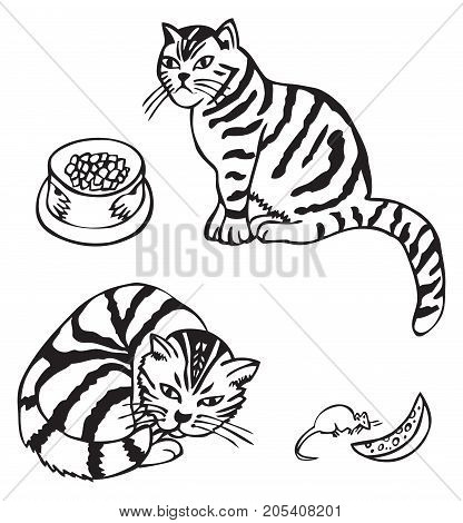 hand drawing Scottish cat sits and rests with the mouse cheese and a bowl of food