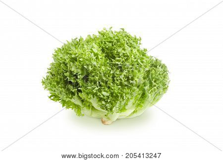 Head of freshly harvested green lettuce with a loose arrangement of leaves on a white background