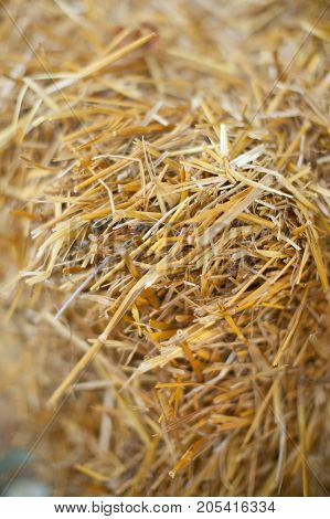 country lifestyle, background, environment concept. close up of dry grass called as everybody know hay, photographed with focus in the center and blured edges