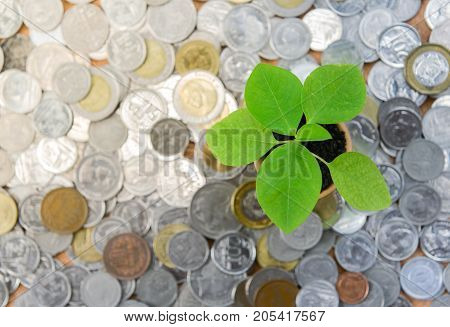 Growing plant among the coins - top view